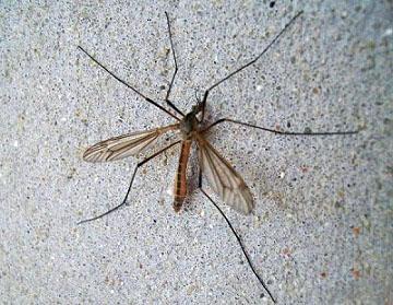 Малярийный