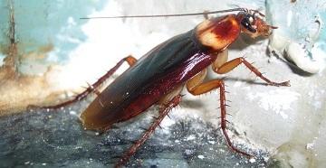 В углу таракан