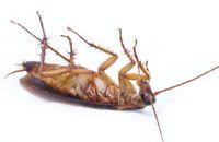 уничтожeние тараканов