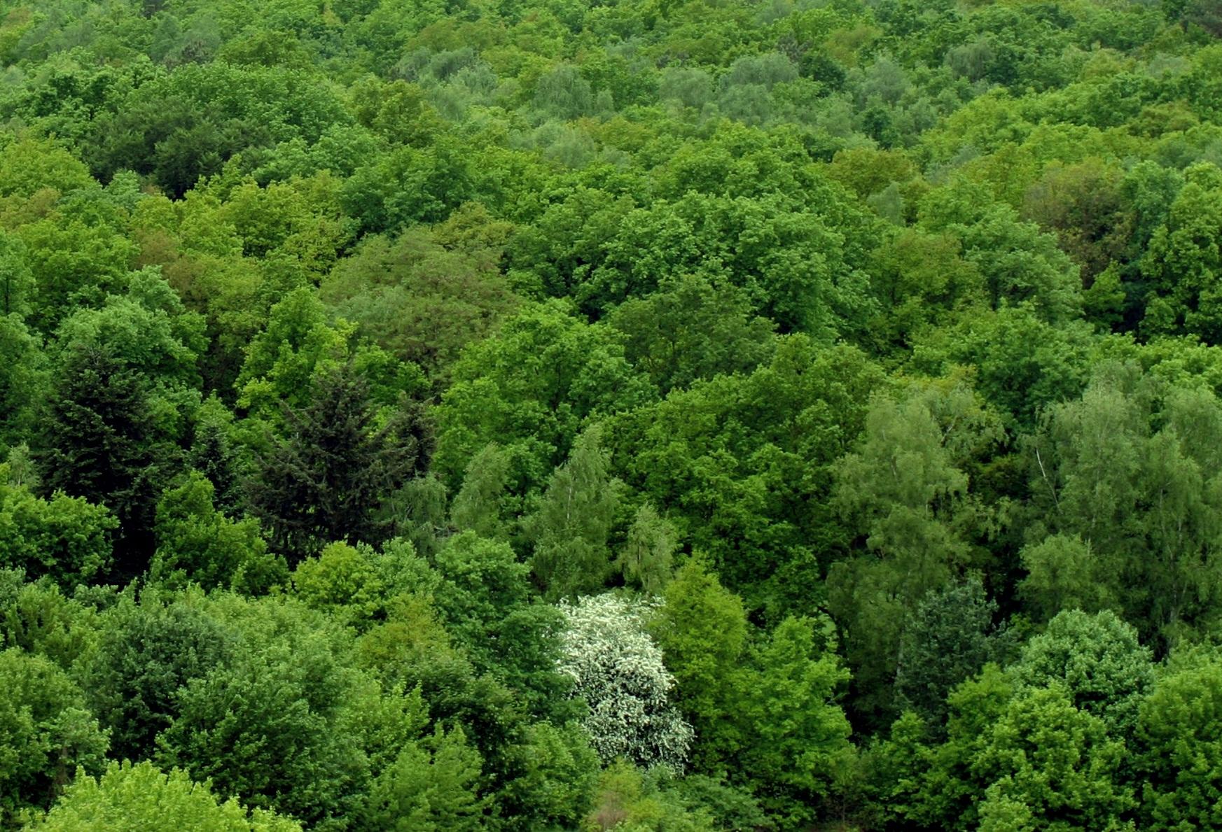Вредители леса и методы борьбы с ними. Естественные враги некоторых вредных насекомых