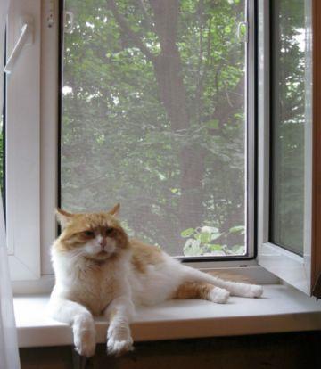 Сетка для владельцев котов