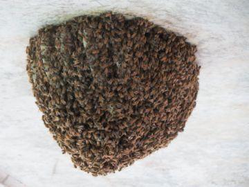 Гнездо диких пчел