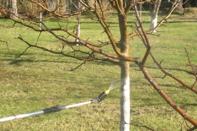 Чем опрыскивать яблони осенью от вредителей видео и фото