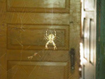 Паутина в доме