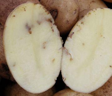 Поврежденный картофель