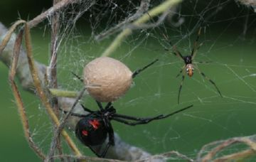Семья пауков