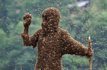 Укус дикой пчелы