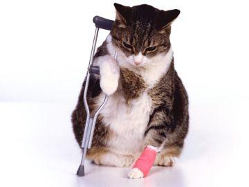 Кошка-пациент