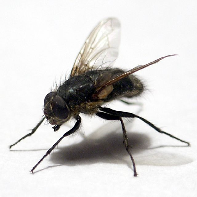 Эффективное средство от мух в помещении