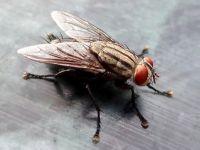 домашние паразиты насекомые