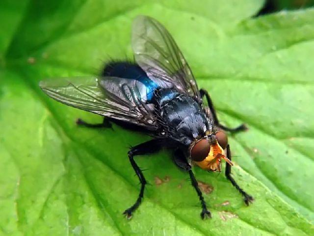 Комары, мухи или мошки, кто хуже?