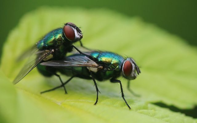 Уничтожение мух в домашних условиях
