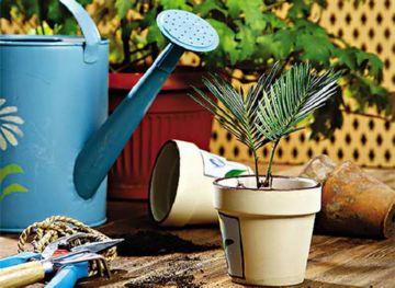 Обработка комнатных растений
