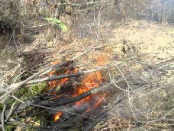Сжигание веток