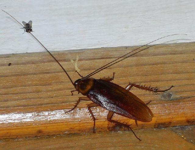 Мелки от тараканов как действует