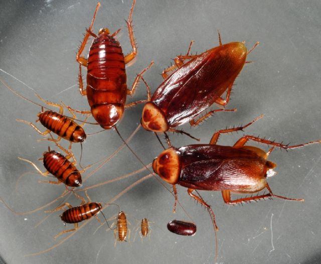 Какой гель от тараканов самый лучший и безопасный?