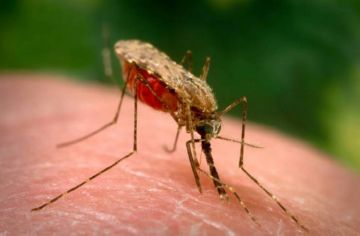 Переносчик малярии на теле человека