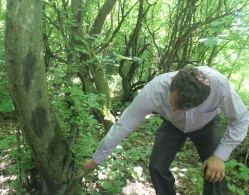 Уход за лесными деревьями