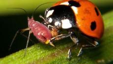Биологические методы защиты