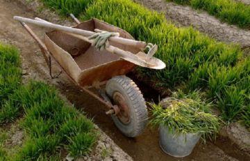 Агротехнический способ