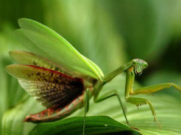 Хищное насекомое