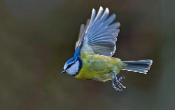 Привлечение птиц в леса