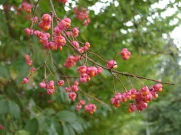 Вредители плодов