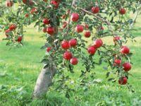 вредители яблонь