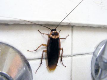 таракан в ванной