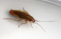 как обработать квартиру от тараканов