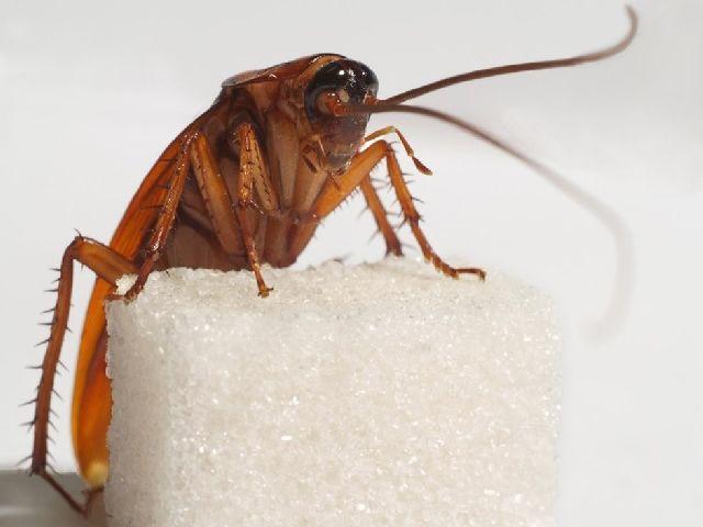 Как понять что дома тараканы