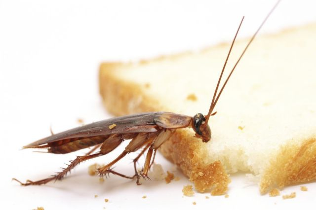 Ловушка для тараканов своими руками