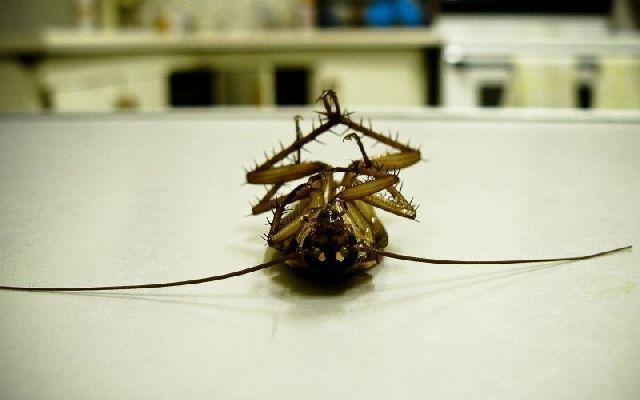 Магия от тараканов в доме