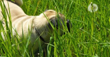 болезни от блох у собак