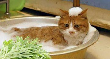 полынь от блох для котов