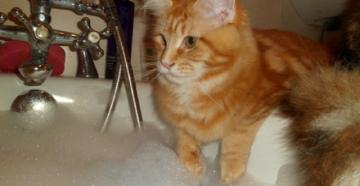 шампунь от блох для котов