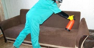 Как уничтожить блох в квартире