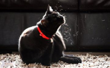 ошейники от блох для котов