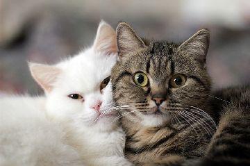 Здоровые коты без блох