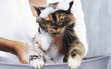 шампуни от блох для кошек