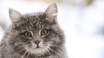 Кот в русской природе