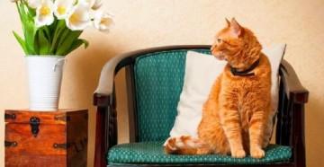средства от блох для котов