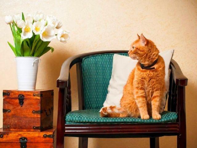 Как вывести блох у кошки капли таблетки
