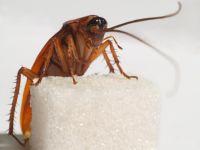 чем морить тараканов в квартире