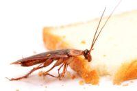 эффективное средство от тараканов в квартире отзывы