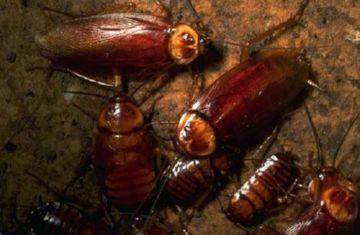 семья тараканов