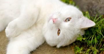 народные методы против блох у котов