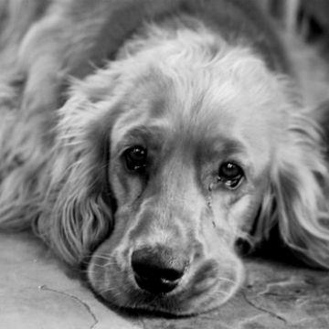 отравление собаки средством