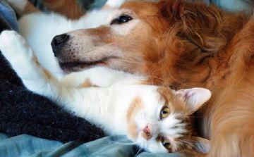 собачьи блохи на животных
