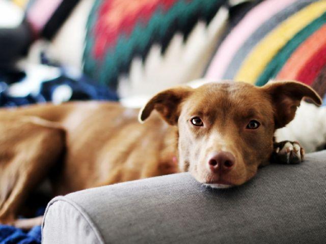 Капли от блох для собак и щенков